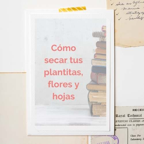 como secar plantitas